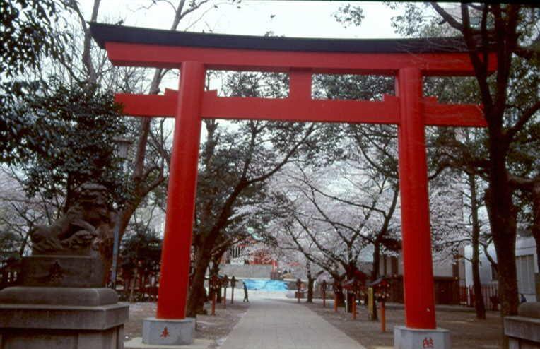 Tokio 1999 zur Kirschblüte, aktuell besteht auch für Japan eine Teilreisewarnung.